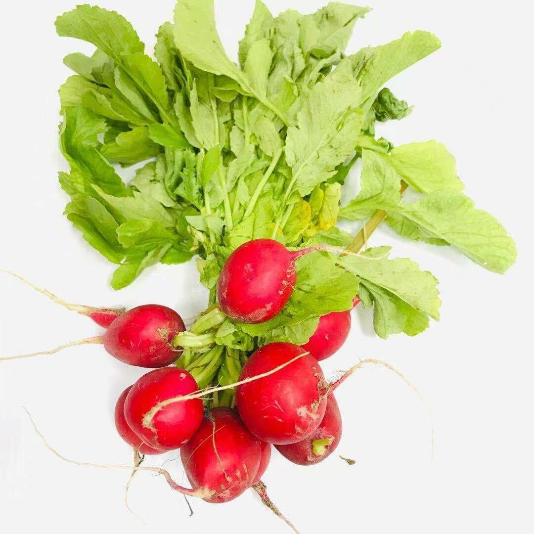 VEG【蔬菜】新鲜圆萝卜1把