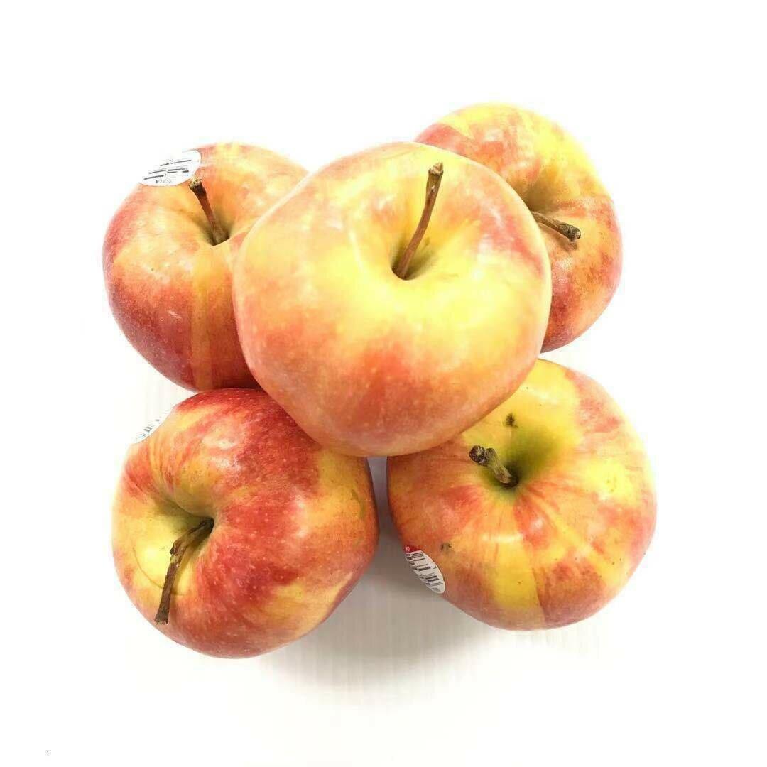 FRUI【水果】加乐苹果3个 ~约1.2lbs