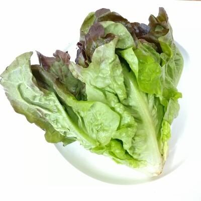 VEG【蔬菜】卷叶生菜 1份