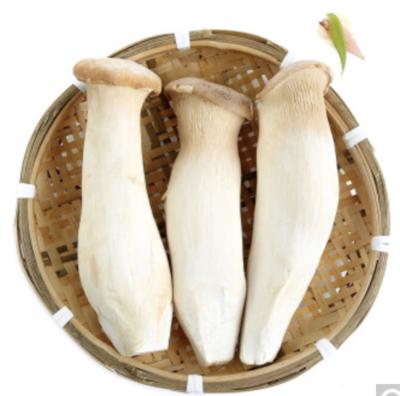杏鲍菇 3pcs~1.5lbs King Mushroom 3pcs~1.5lbs