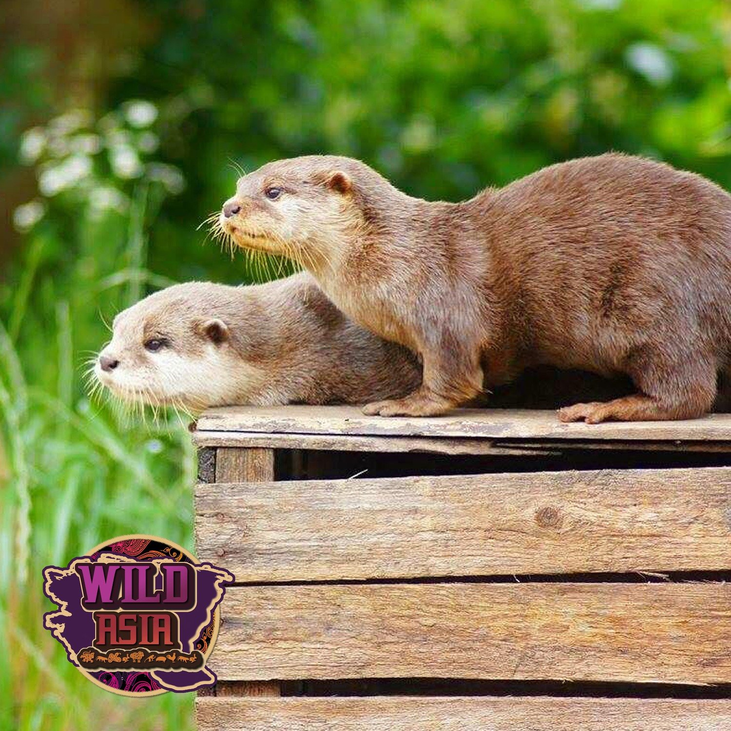 Karn and widget the OTTERS