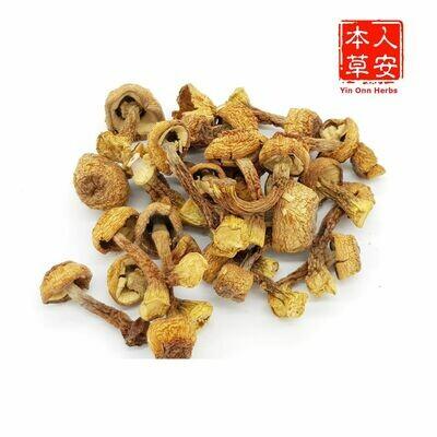 巴西磨菇(姬松茸) 100gm Agaricus blazei Murr.