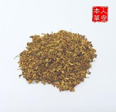 浙江桂花 38gm Osmanthus fragrans (Thunb.) Lour.
