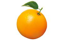 Shop Orange Mailer