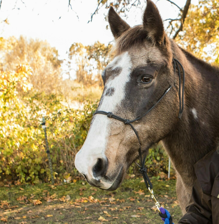 The Dandy Horse