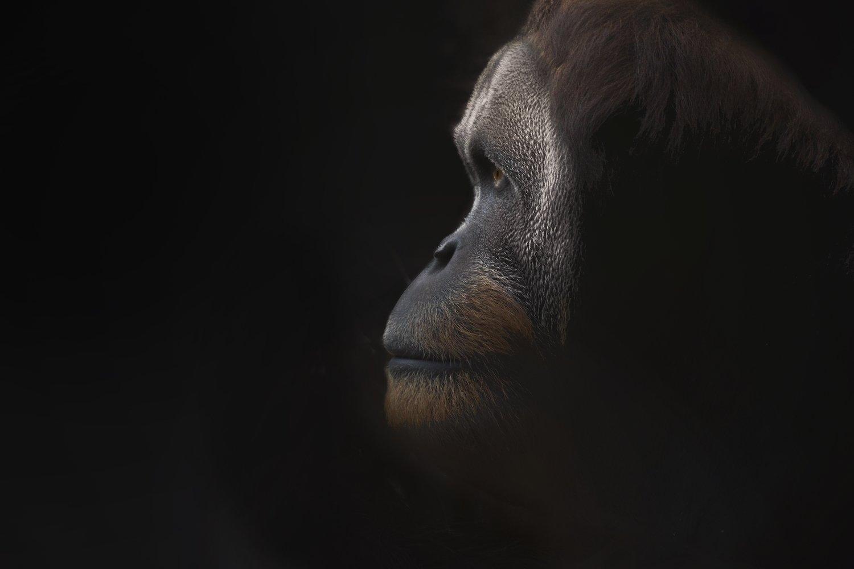 ~Ape-X~