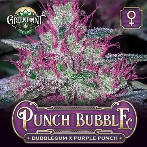 Punch Bubble