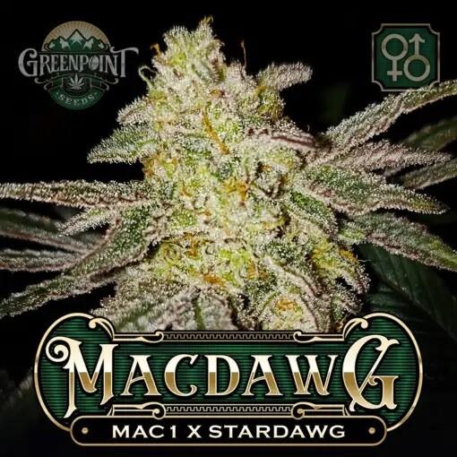 MAC Dawg
