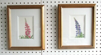 Pair of Lupins