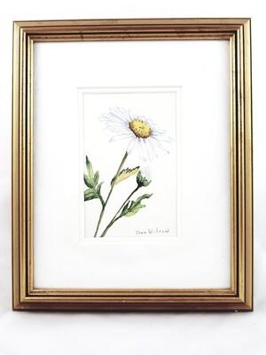 Wild Daisy: Nova Scotia Wild Flower Collection (sold individually)