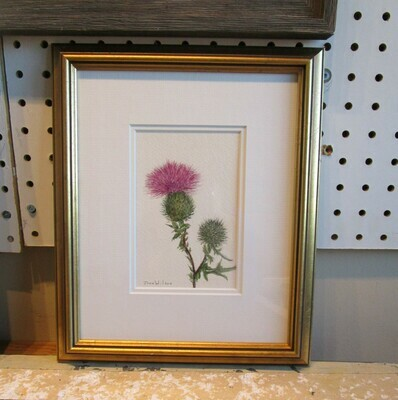 Thistle: Nova Scotia Wild Flower Collection (sold individually)