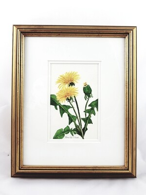 Dandelion: Nova Scotia Wild Flower Collection (sold individually)