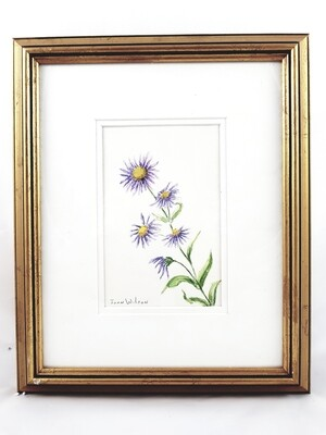 Aster: Nova Scotia Wild Flower Collection (sold individually)