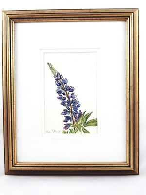 Lupin: Nova Scotia Wild Flower Collection (sold individually)