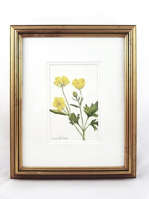Buttercup: Nova Scotia Wild Flower Collection (sold individually)