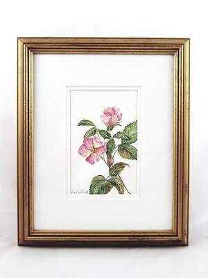 Rose: Nova Scotia Wild Flower Collection (sold individually)