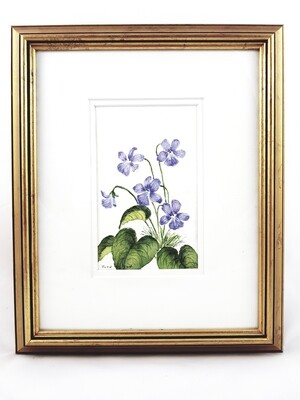 Wild Violets: Nova Scotia Wild Flower Collection (sold individually)