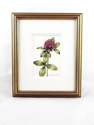 Clover: Nova Scotia Wild Flower Collection (sold individually)