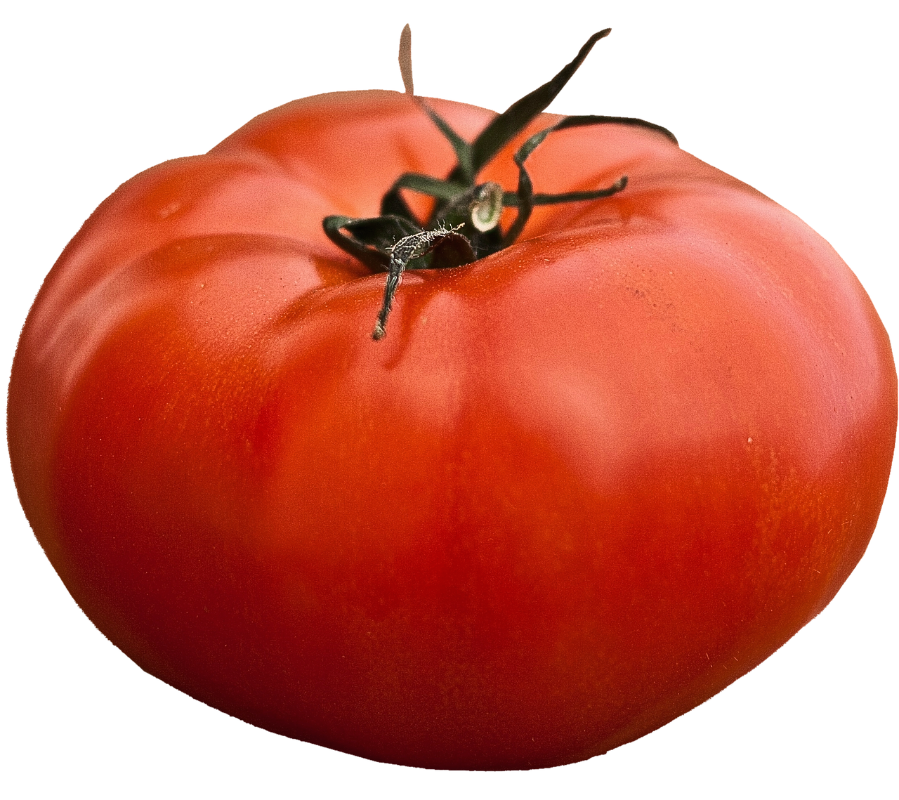 ALL-AMERICAN GIANT BEEFSTEAK TOMATO 100 SEEDS HEIRLOOM NON-GMO OPEN-POLLINATED