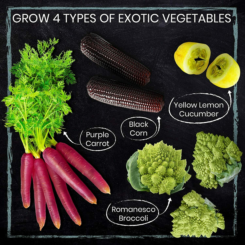 Exotic Vegetable Garden Kit. Easily Grow 4 Funky Vegetables from Seeds