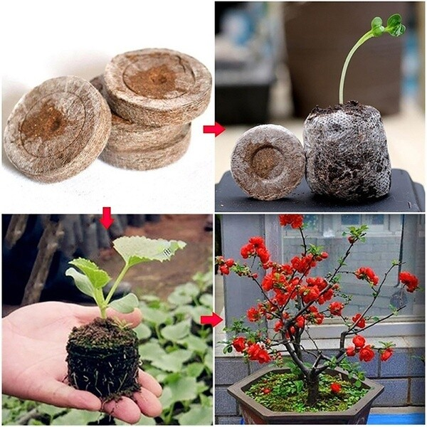 50pcs 25mm Jiffy Peat Pellets and Coco Pellets Seed Starting Plugs Seeds Soil