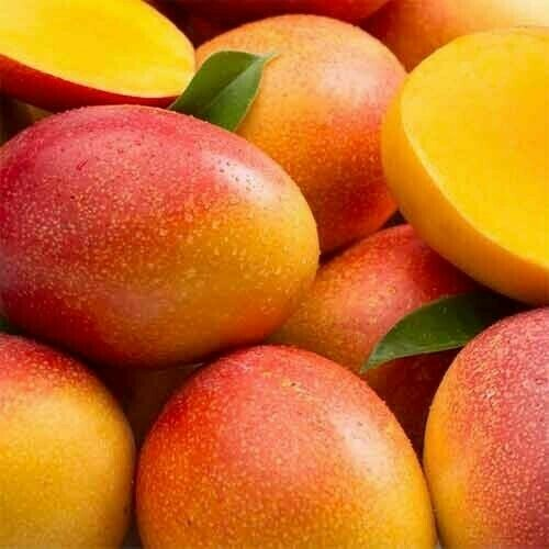 """Mango Tropical Fruit Tree Plant The plants size may vary 8""""- 1.5'"""