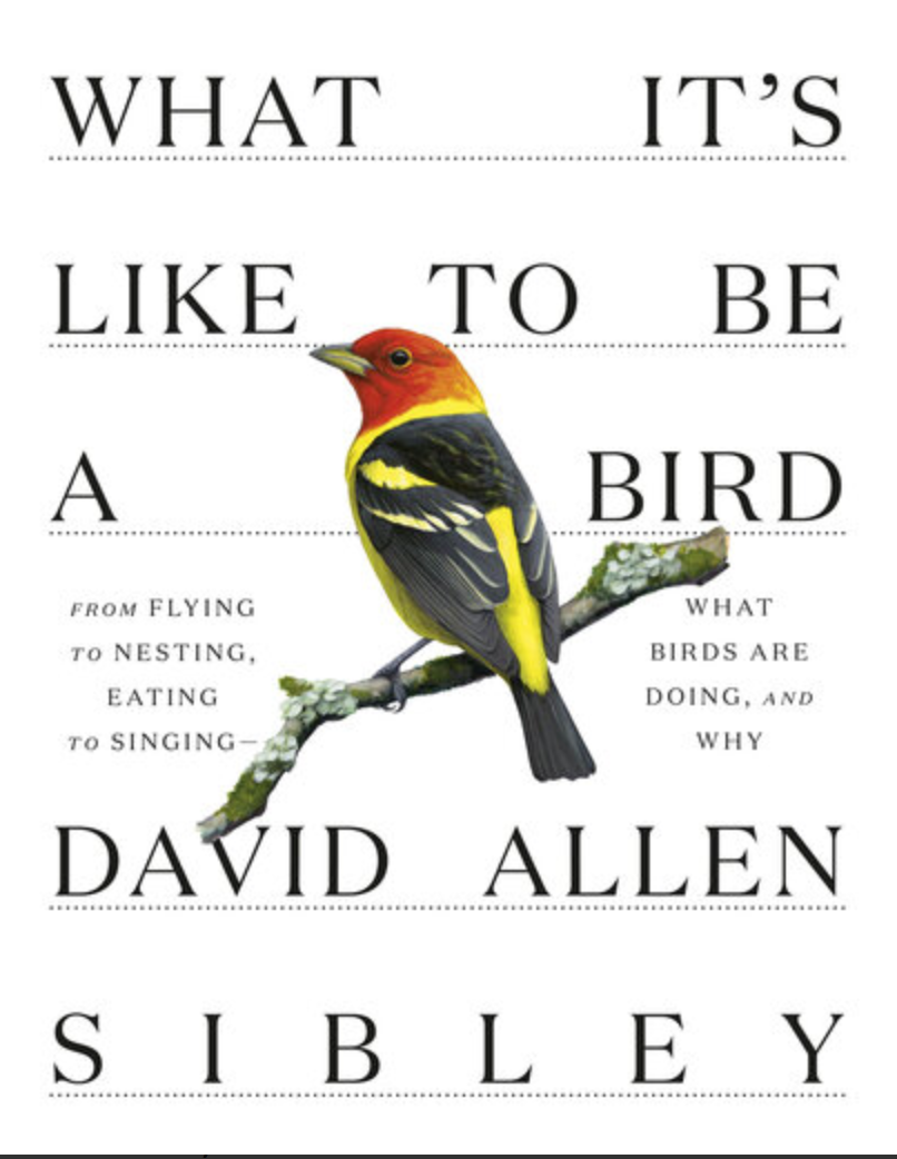 What It's Like to Be a Bird: From Flying to Nesting, Eating to Singing. Paperback