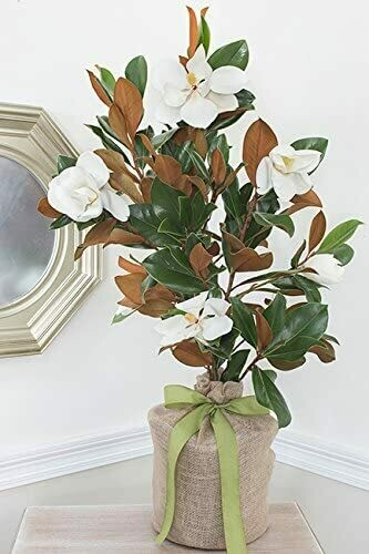 Southern Magnolia Father's Day Gift Tree by The Magnolia CompanyTree Gift -