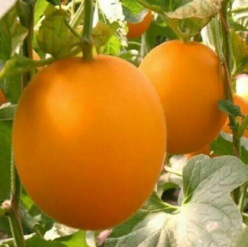 20PCS SEEDS Fresh Earth Sweet Organic Red Melon Seeds Vegetable Fruit Seeds