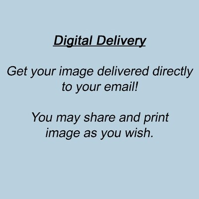 Digital Image Delivery