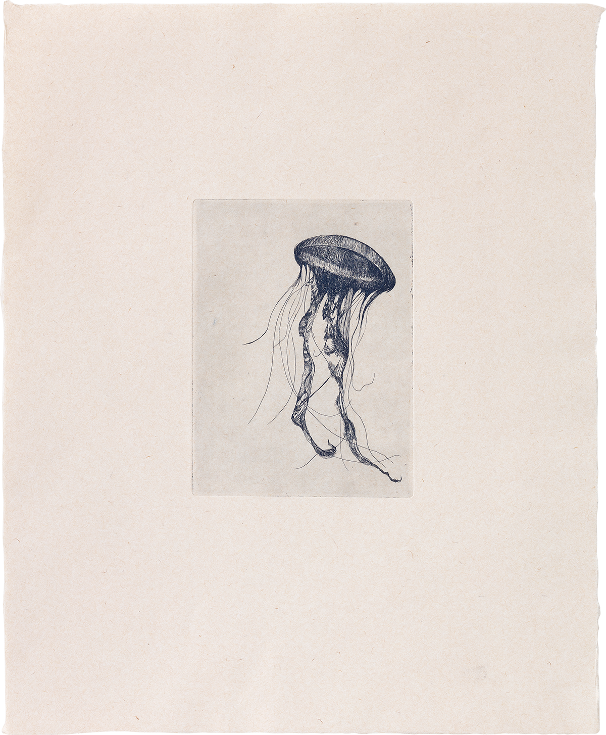 Totem Jellyfish (II) - Etching
