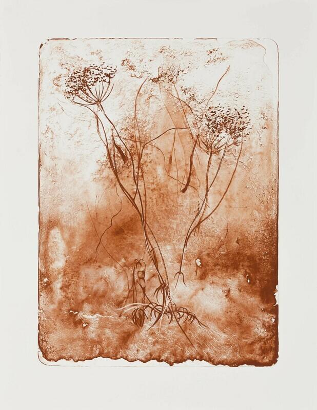 Hemlock Seed (Siena) - Lithograph