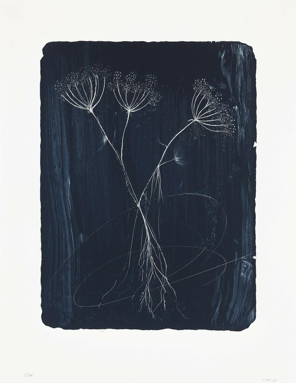 Hemlock (Flower) - Lithograph