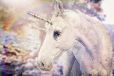 Nominate a Unicorn