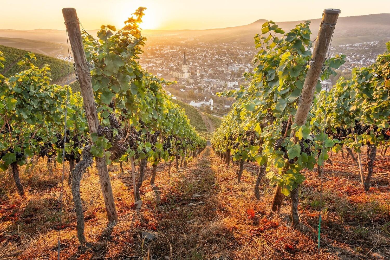 Blick auf Ahrweiler mit goldenen Weinreben - Leinwand