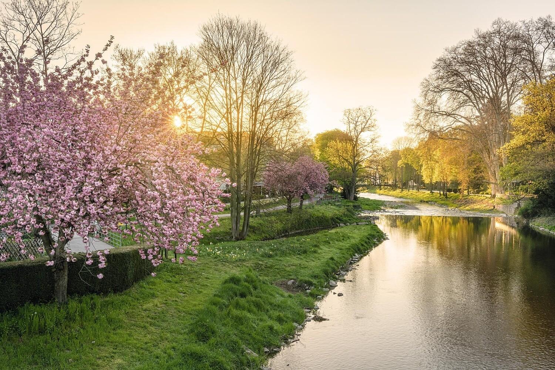 Frühlingsmorgen an der Ahr in Bad Neuenahr - Leinwand