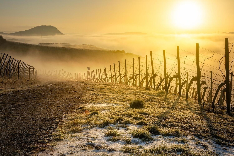 Winternebel in den Weinbergen - Leinwand