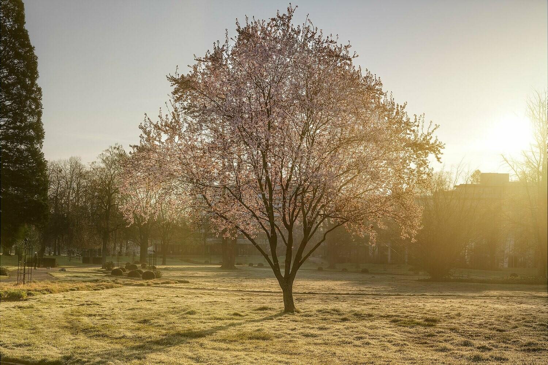 Frühling im Dahliengarten - Leinwand