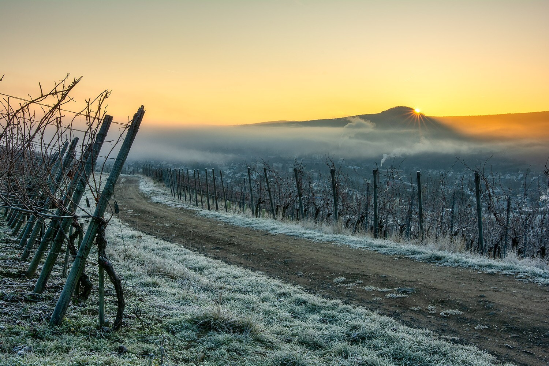 Frostiger Sonnenaufgang - Leinwand