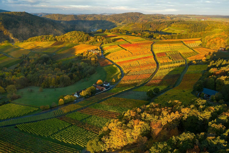 Blick über goldene Weinfelder