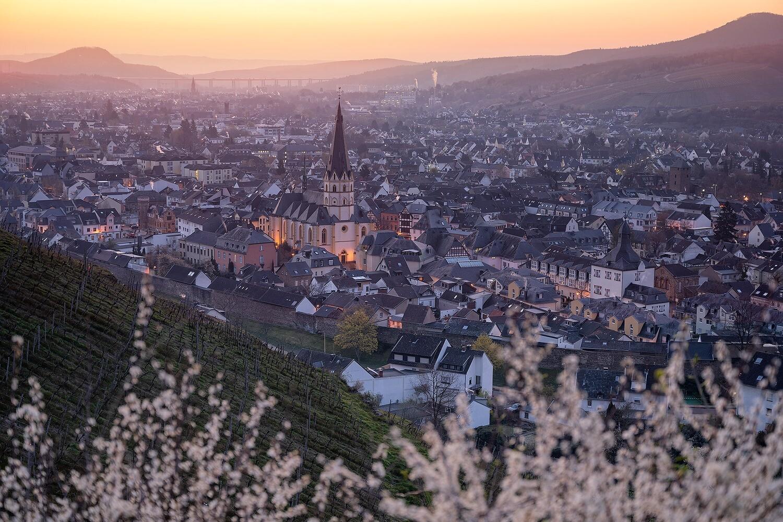 Erste Frühlingsblüher über Ahrweiler