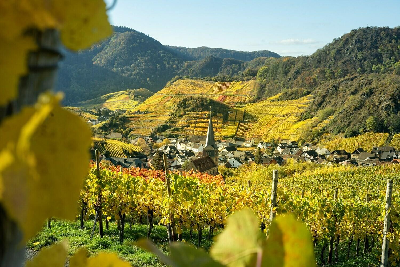 Weinort Mayschoß im Herbst