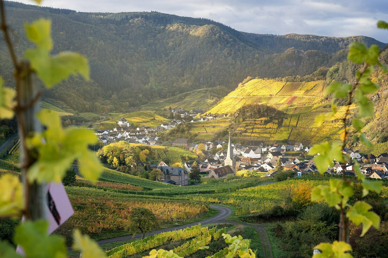 Weinort Mayschoß im goldenen Herbst