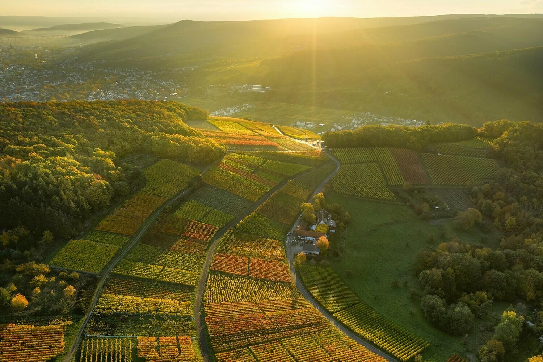Weinfelder oberhalb von Walporzheim