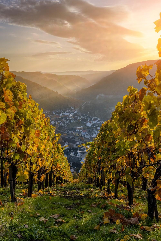 Dunstiger Herbstmorgen in Dernau (Hochformat)
