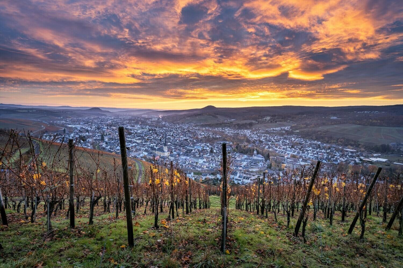 Die letzten Weinblätter im Herbst