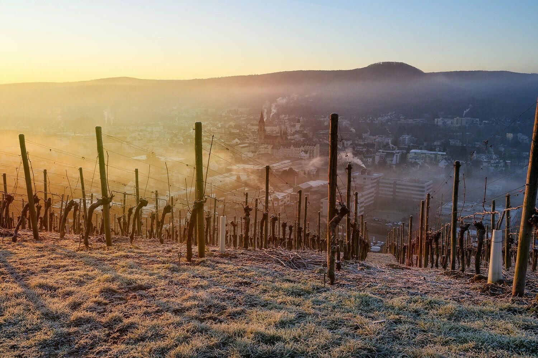 Frostige Weinreben über Bad Neuenahr