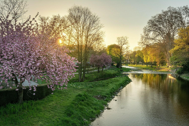 Frühling an der Ahr in Bad Neuenahr