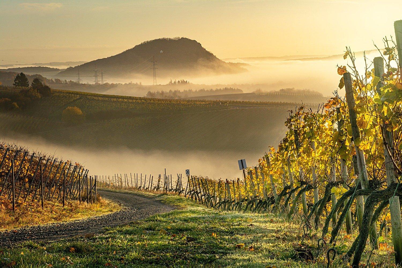 Herbstliche Weinberge im Nebel - Leinwand