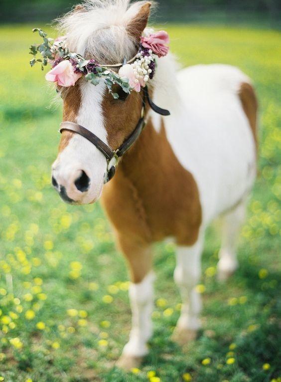 Hair Flower pony